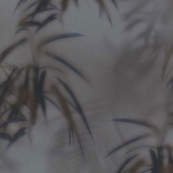 219545 Dimensions Edward Vliet